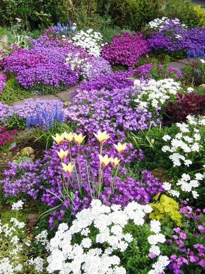 My front garden in springtime.
