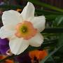 Flowers_in_garden_summer_08_18_