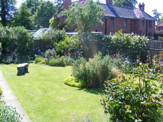 my back garden