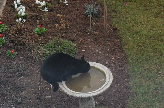 Look Who's In The Birdbath !!!