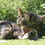 2009_0601cats0023