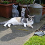 2009_0511cats0030
