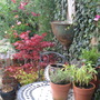 part of our small garden