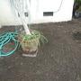 Yard_plant_pics_03_11_10_020