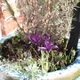 Springbulbs_001