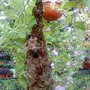 Bird's nest on a hanging basket