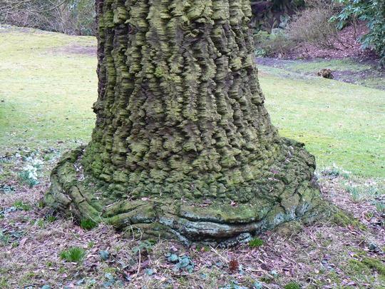 Tree bark Rhode hall