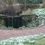 Snowdrops at Rode Hall in Cheshire