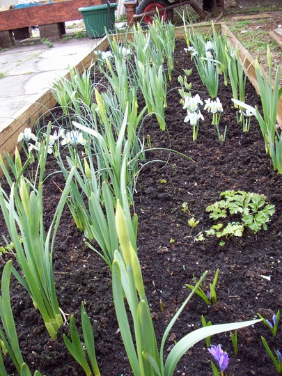 bulb plot has a sudden burst of energy and bloom