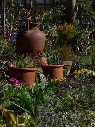 Spring pots (Narcissus)
