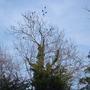 The birds gathering before dusk