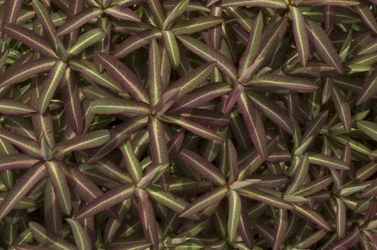 Foliage variatons4