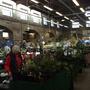 Plant_heritage_day.