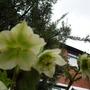 Garden_22_mar_005