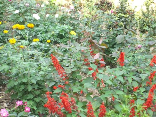 my garden photo in chattisgarh state