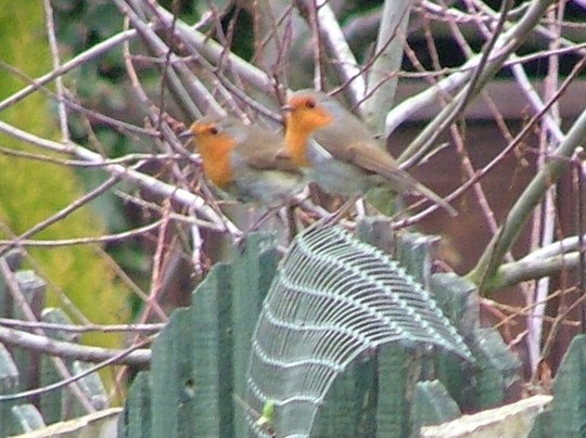 mr and mrs robin