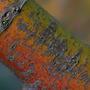 Acer bark (close) (Acer palmatum (Japanese maple))