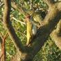 Unknown_bird