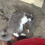 Cat in greenhouse!
