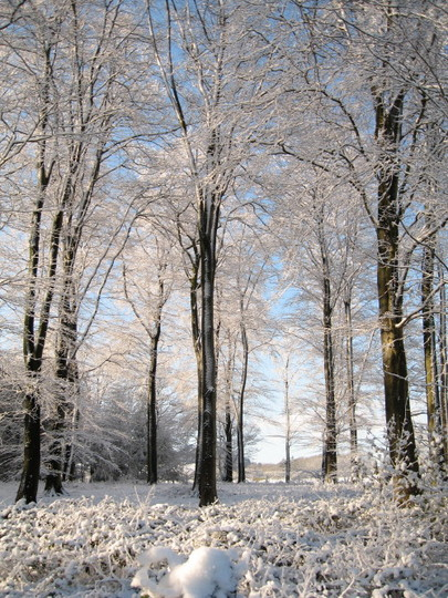 Copse in winter