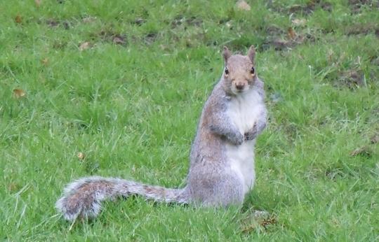 Where did I hide those nuts