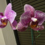 26_de_marzo_2010_625