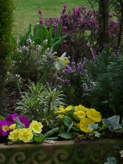Garden glimpses 1