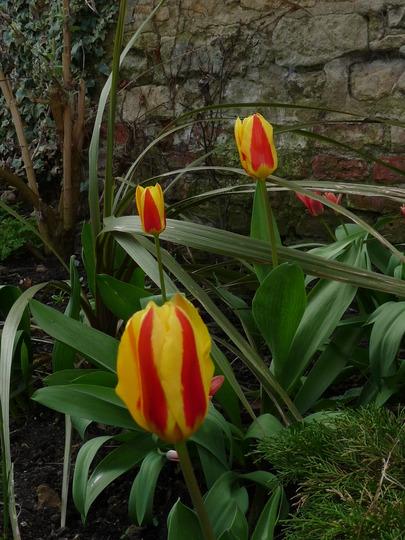 Garden glimpses 3