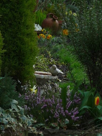 Garden glimpses 4