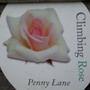 Penny_lane_climbing_rose