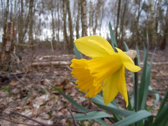 Arrival of Spring, Surrey Heath Chobham