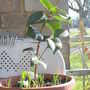 Camelia Dr King on balcony 2009-02-21