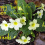 Happy Easter GOY  members and good friends  ( Blog )