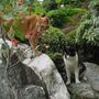 June 2002, Jugo and Ginger in my parents' garden in Japan (Malus x. cerasifera)