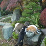 Jugo and  the other cats, busy eating biscuits in my parents' garden  (Rhodea japonica, Enkianthus perulatus, etc.)