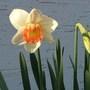Spring_flowers_005