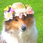 ♪♪♪ EASTER BONNET ♪♪♪.  from blog.