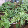 Our Fernery