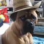 Dexter in his Easter bonnet!