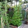 veg garden 2 year