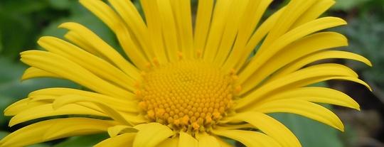 Inlaws_flowers_1.jpg