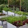 My kitchen garden