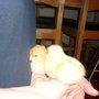 2 chicks.....