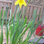 Lonely Daff