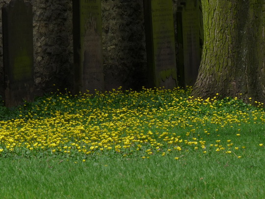 Celandines by the Church (Celandine)