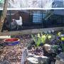 Spring chickens !