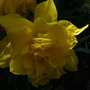 Spring_and_summer....2009_2377