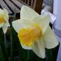 Garden2_069