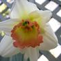 Spring_flowers_32_