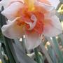 Spring_flowers_29_